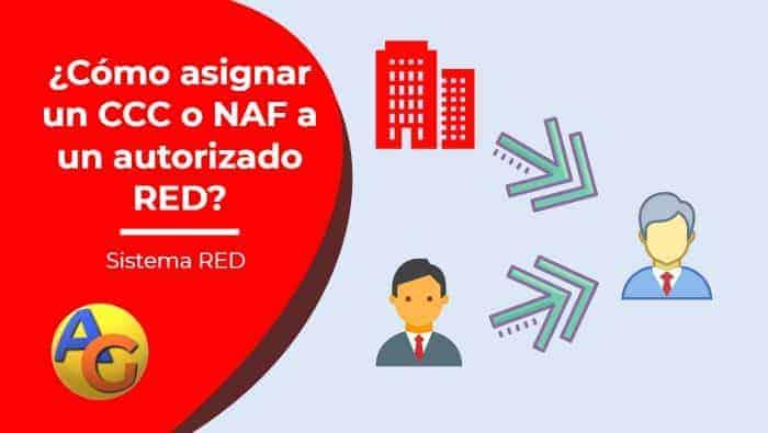 asignación ccc naf autorizado red sistema red